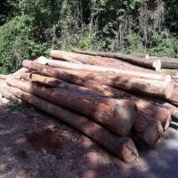Odstraňování napadených stromů kůrovcem