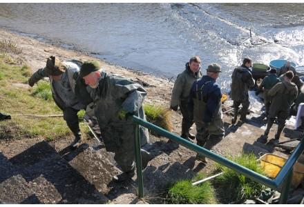 Výlov Hornomlýnského rybníka (Vernerák) 4.dubna 2019 od 07:30 hodin